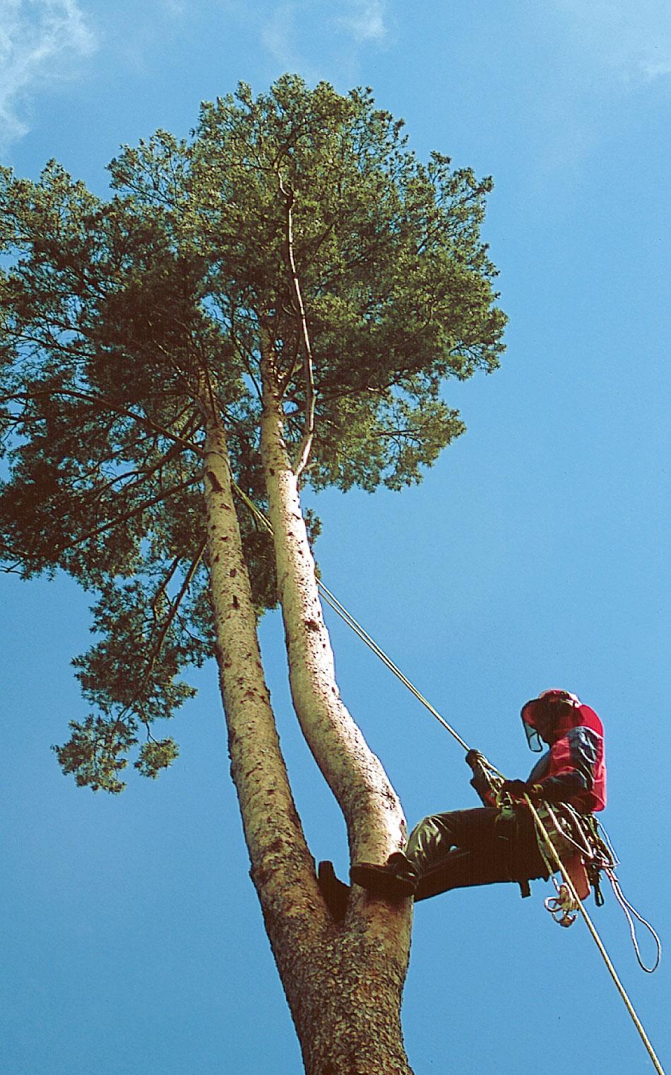 Säkerhet i trädet