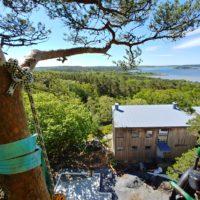 Fällning Av Träd I Särö